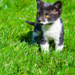Portrait of a cute little kitten in the grass — Stock Photo