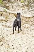 Dog standing on the sandy cliff — Stock Photo