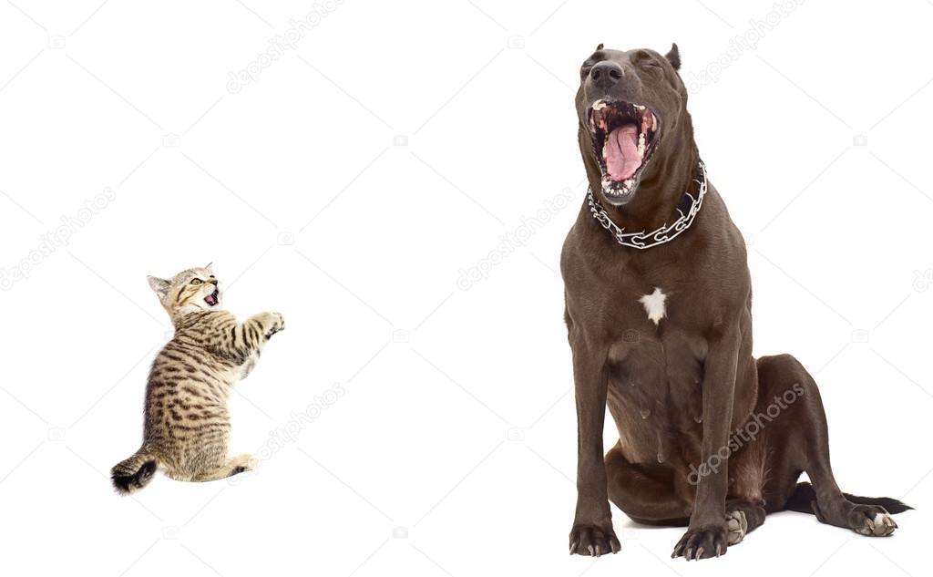 chaton avait peur de gros chien photographie sonsedskaya. Black Bedroom Furniture Sets. Home Design Ideas