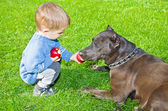 Cute boy regales to a dog apple — Stock Photo
