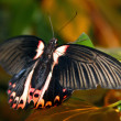 Butterfly on a branch — Stock Photo