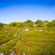 Stock Photo: Solovki, labyrinths on Zayatsky island