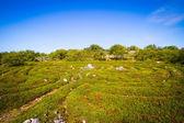 The Solovki, labyrinths on the Zayatsky island — Stock Photo