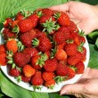 Woman's hands holding a plate with fresh strawberries over green - Stock Photo