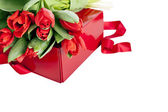 Red tulips and gift box on a white background — Stock Photo