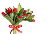 Bouquet of red tulips with festive ribbon isolated over white — Stock Photo