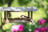 Birds feeder in a garden — Stock Photo