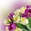 Bouquet from yellow and purple tulips — Stock Photo #42806037