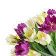 Bouquet from yellow and purple tulips isolated on white — Stock Photo