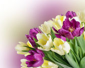 Bouquet from yellow and purple tulips — Stock Photo