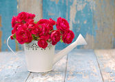 Bouquet of pink  roses in white watering can — Stock Photo