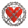 Isolated heart in barbed wire sphere — Stock Photo