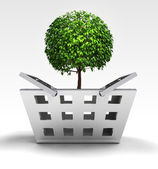 Natural tree as trade merchandise — Stock Photo
