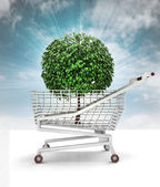 Bought tree in shopping cart with sky — Stock Photo