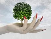 Green leafy tree in women hand render — Stock Photo