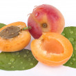 Apricot on a white background — 图库照片