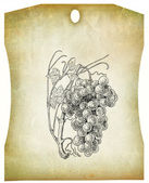 Grapes illustration — Stock Photo