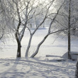 Stock Photo: Winter view