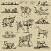 Animals set illustration — Stock Photo