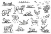 Animals set illustration — Stock Photo