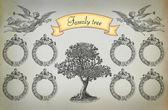 Family tree — Stock Photo