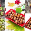 Stock Photo: Berries and nuts fruit collage