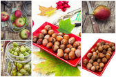 Berries and nuts fruit collage — Stock Photo