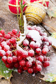 Fruits viburnum — Stock Photo