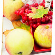 Harvest of autumn apples — Stock Photo #32312109