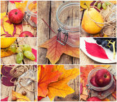 Collage their fruits and berries — Stock Photo