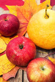 October harvest of apples and pears — Stock Photo