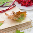 Old book spangled leaves in the garden — Stock Photo