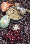 Yumurta ve dikiş aksesuarları — Stok fotoğraf