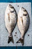 Mediterranean fish delicacy Dorado — Stock Photo