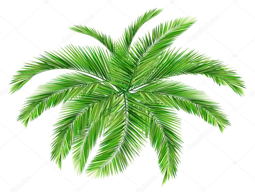 Palm Leaves Palm leaves  stock