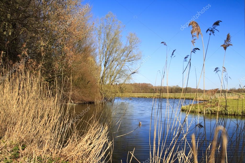 Biesbosch national park in Dordrecht Holland — Stock Photo #12770624