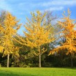 Three colorful autumn trees standing in a row — Stock Photo