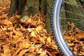 Mountain bike wheel and tire tread with autumn leaves — Stock Photo