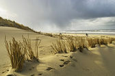 Walking on the beach in Holland — Stock Photo