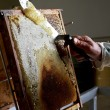 Honeycomb being cleaned — Stock Photo