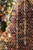 Honeycomb frame — Stock Photo