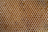 Honeycomb frame full with honey — Stock Photo