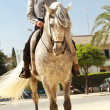 Stock Photo: Noble Horse and Rider