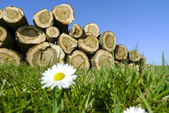 Felled trees stacked — Stock Photo