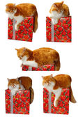 Red cat laing on the gift box — Stock Photo
