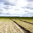 Field with horizon - Stock Photo