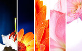 Flower banner — Stock Photo
