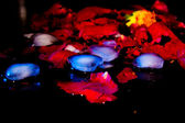 Ice rose in the darkness — 图库照片