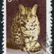 Stock Photo: Stamp printed in India, shows Leopard cat (Prionailurus bengalensis), circ2000