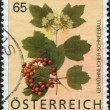A stamp printed in the Austrian, shows a bushes Viburnum opulus, circa 2007 - Stock Photo
